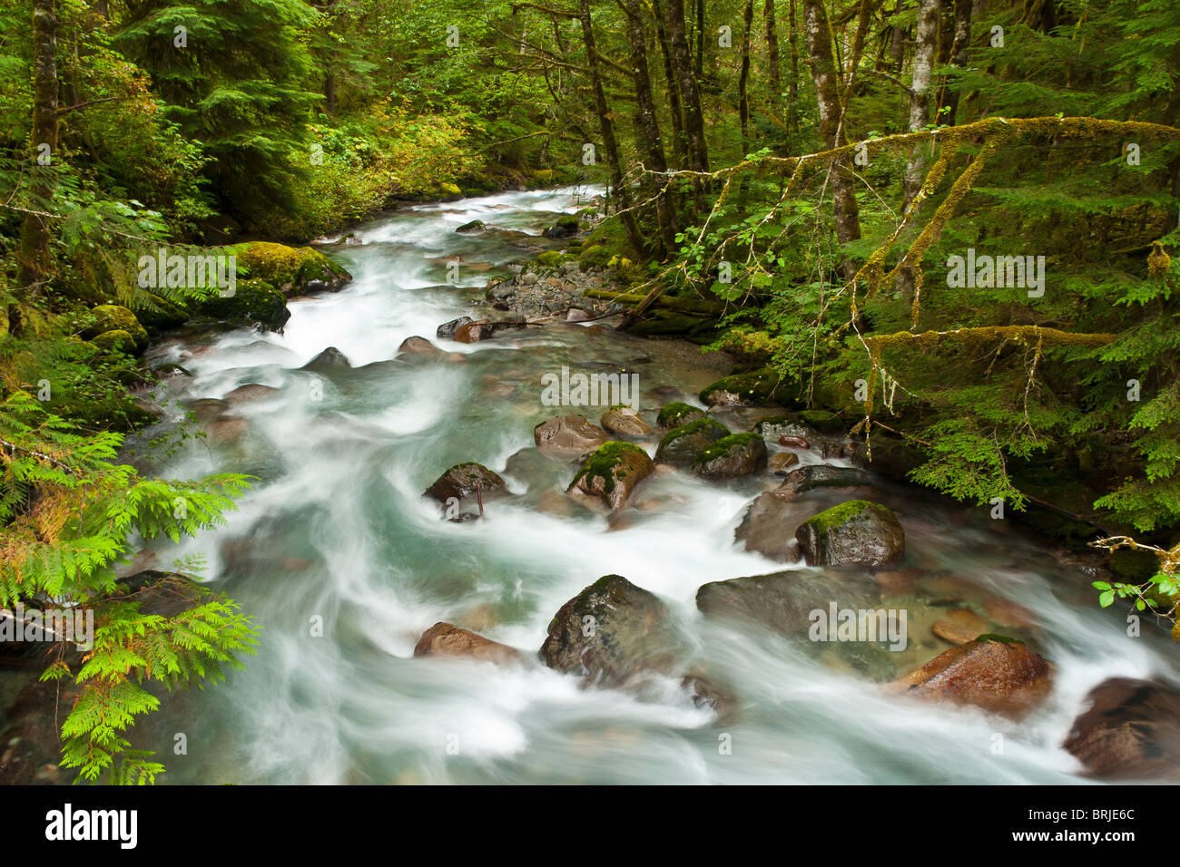 North Fork Cascade River, Mount Baker-Snoqualmie National Forest, North Cascades, Washington. - Stock Image