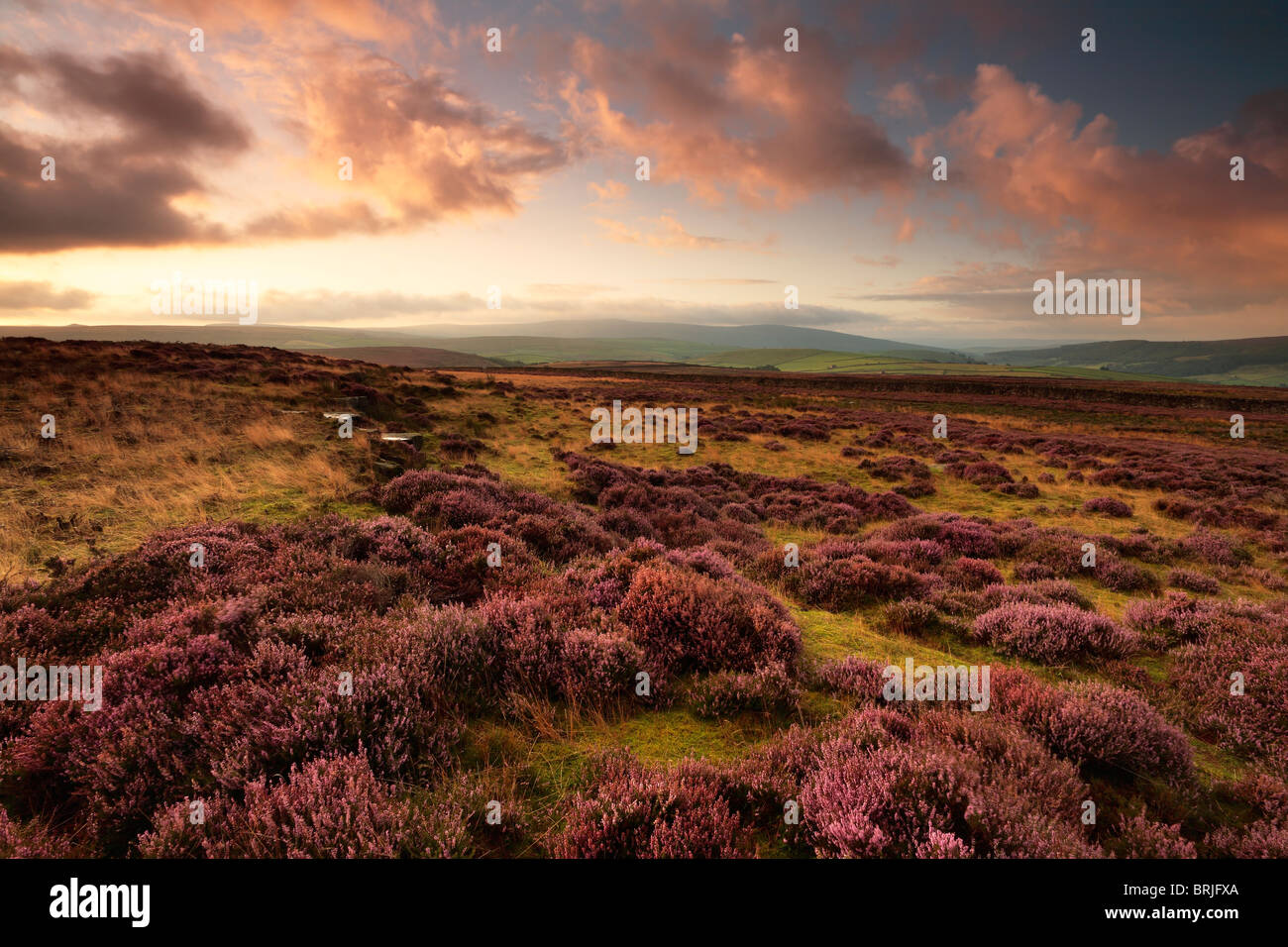 Sunrise over the heather moorland atop Dumpit Hill near Hebden in the Yorkshire Dales of England - Stock Image