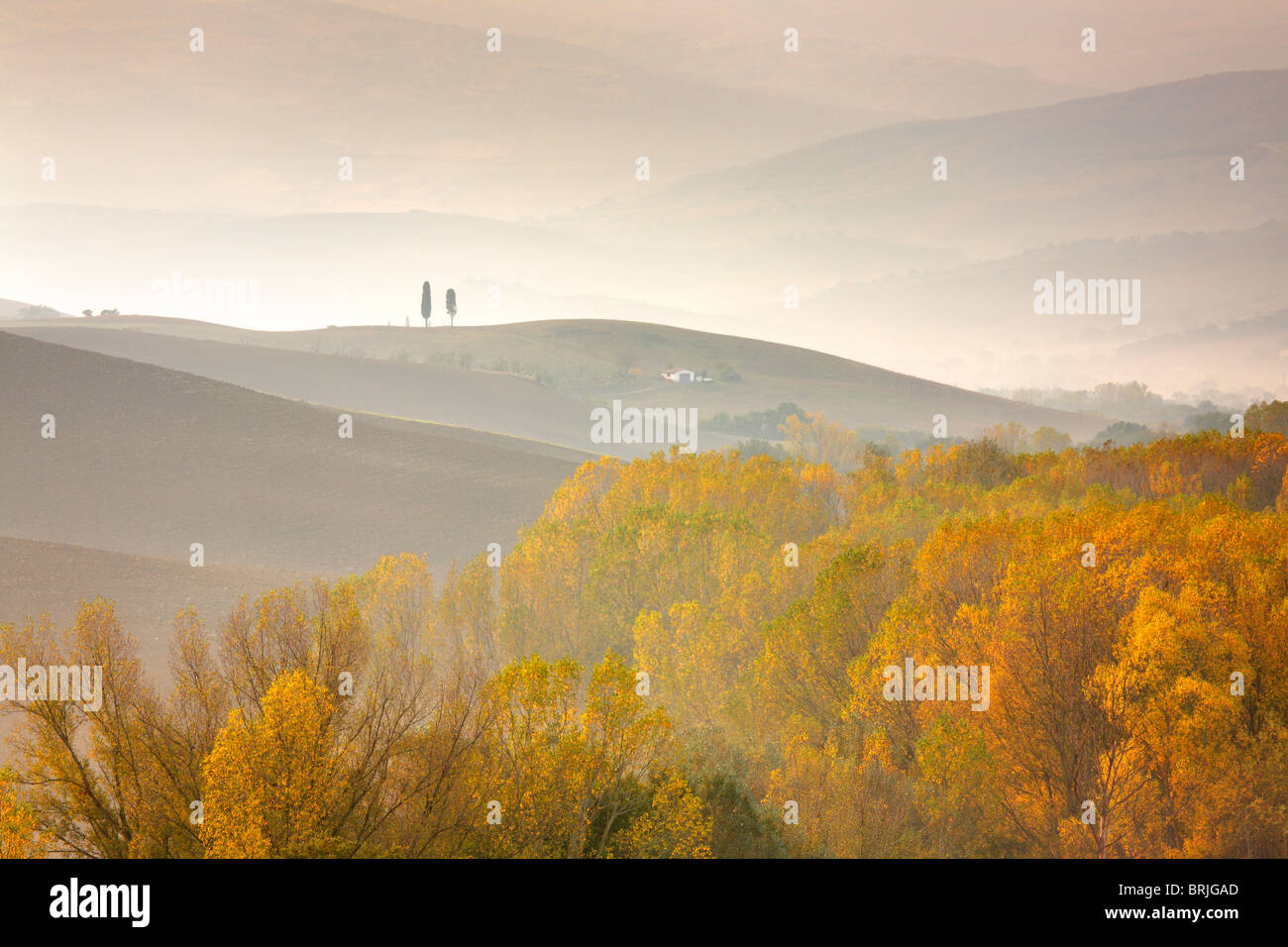 Blazing autumn color on a misty Autumn morning in the Val D'Orcia region of Tuscany - Stock Image