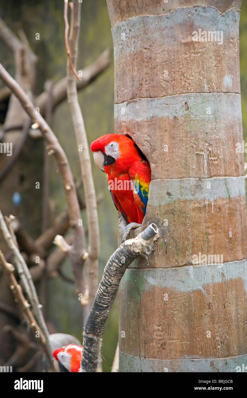 Henry Doorly Zoo - Lied Jungle - Stock Image