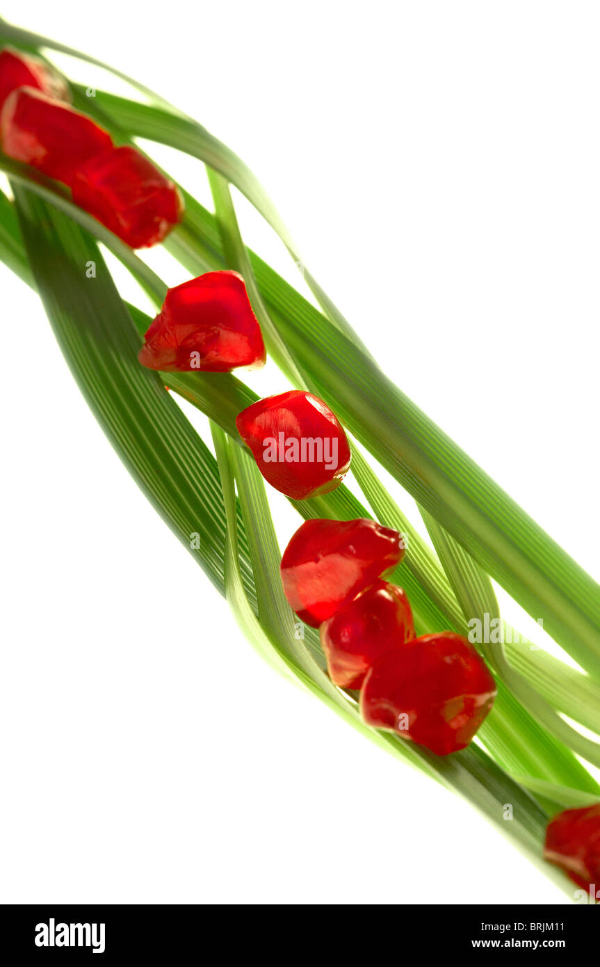 Pomegranate seeds arranged on blades of wheatgrass - Stock Image