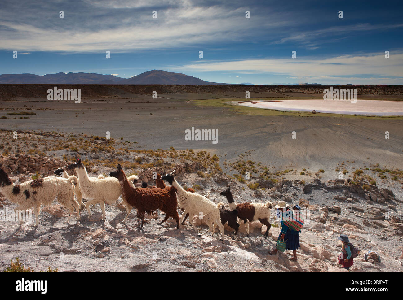 a woman with her daughter with a herd of llama in a volcanic crater on the altiplano, nr Castiloma, Bolivia - Stock Image
