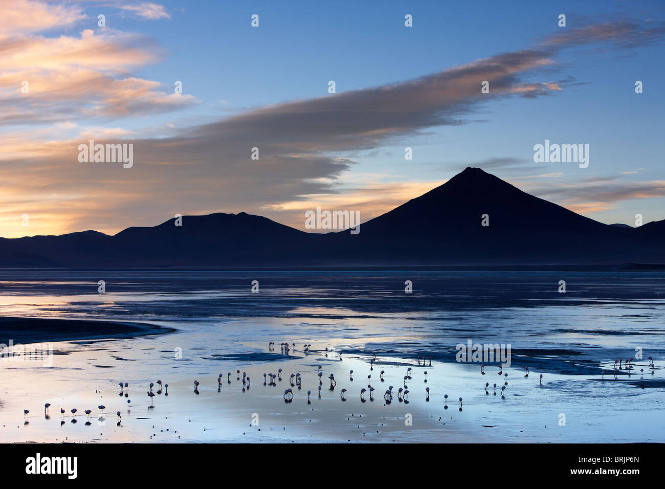 flamingos on Laguna Colorada at dawn, Eduardo Avaroa Andean Fauna National Reserve, Bolivia - Stock Image