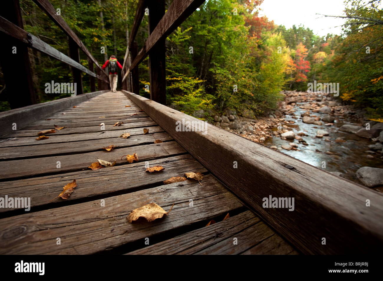 Low angle perspective of one man hiking across a wooden bridge with a stream and fall leaves in view. - Stock Image