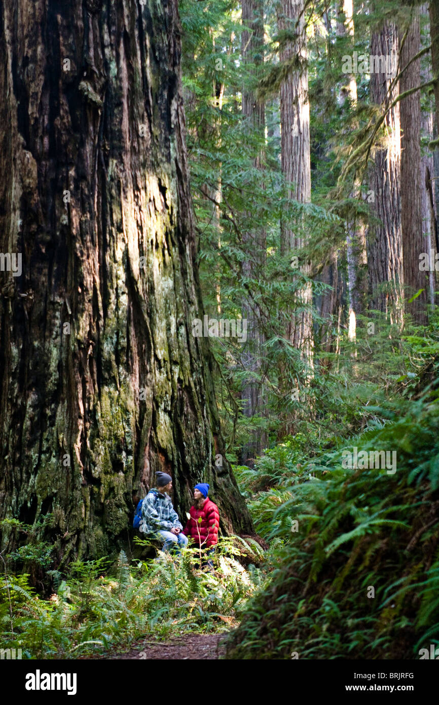 A young couple talk while sitting under a massive redwood in California. - Stock Image