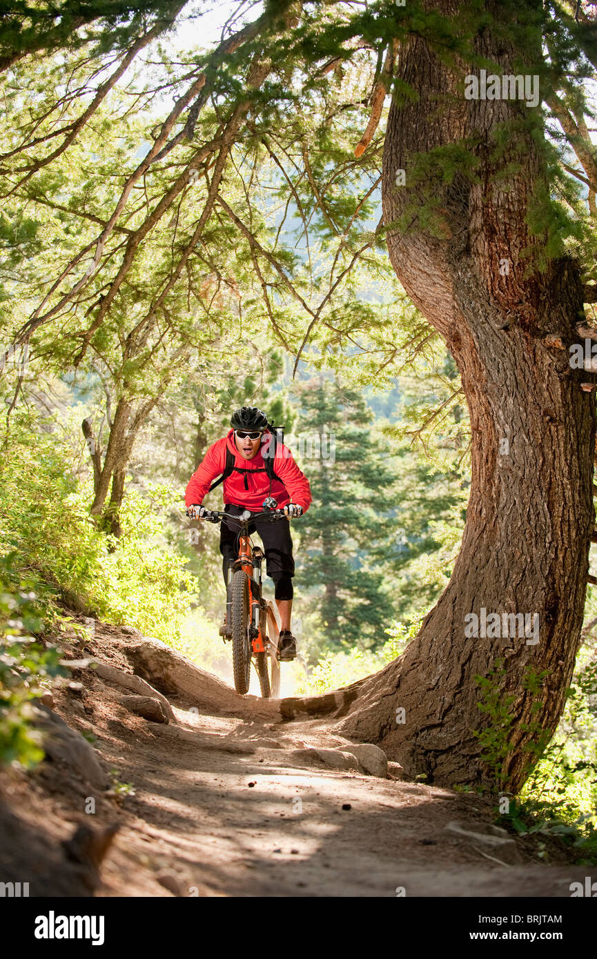 A Young Man Rides His Mountain Bike On A Trail In Big Cottonwood