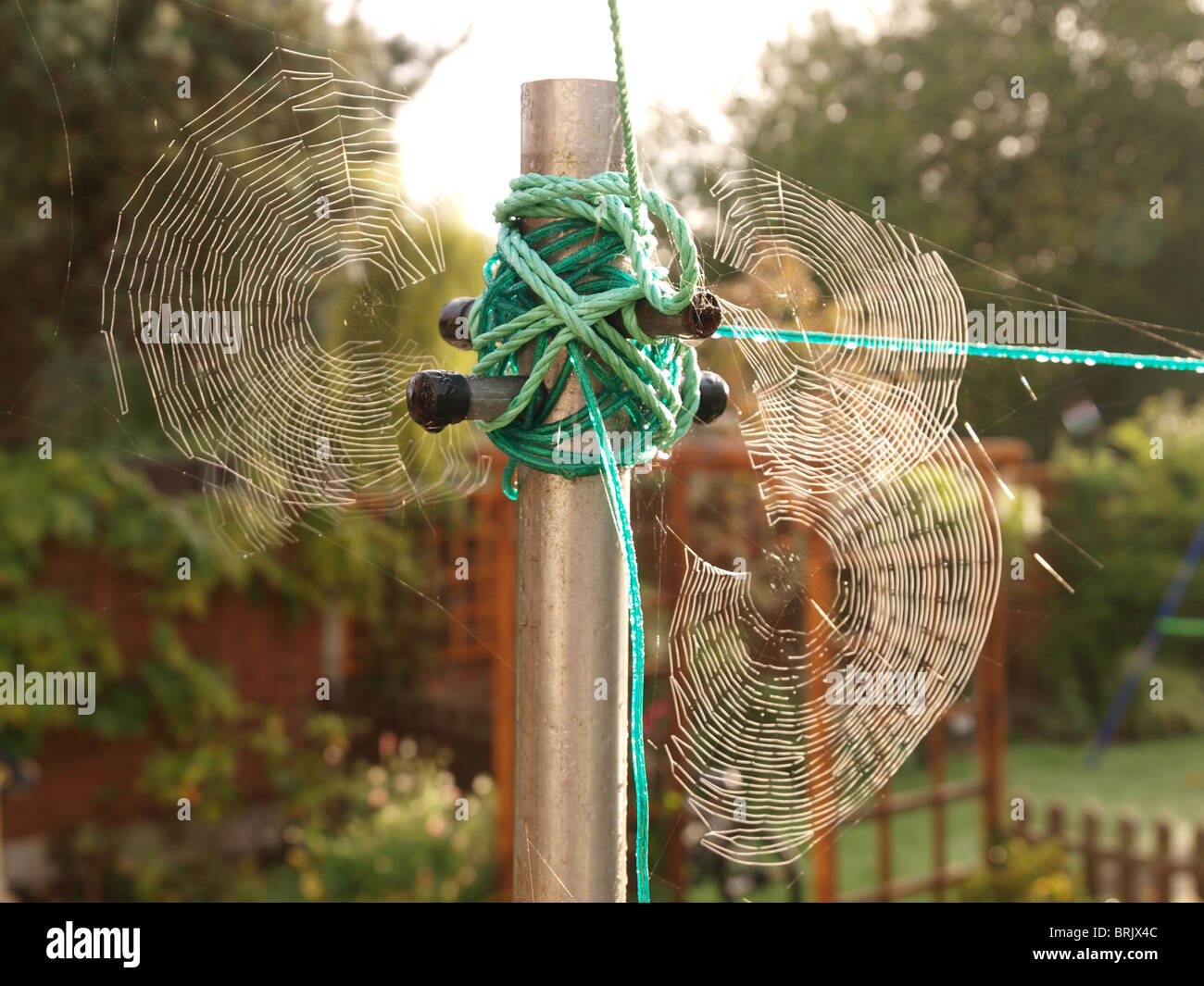 group of spiders webs after rain early morning woven around lineprop - Stock Image