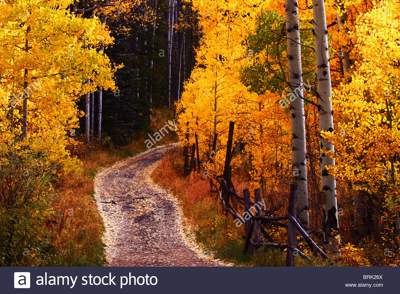 Colorado fall colors in the high country. - Stock Image