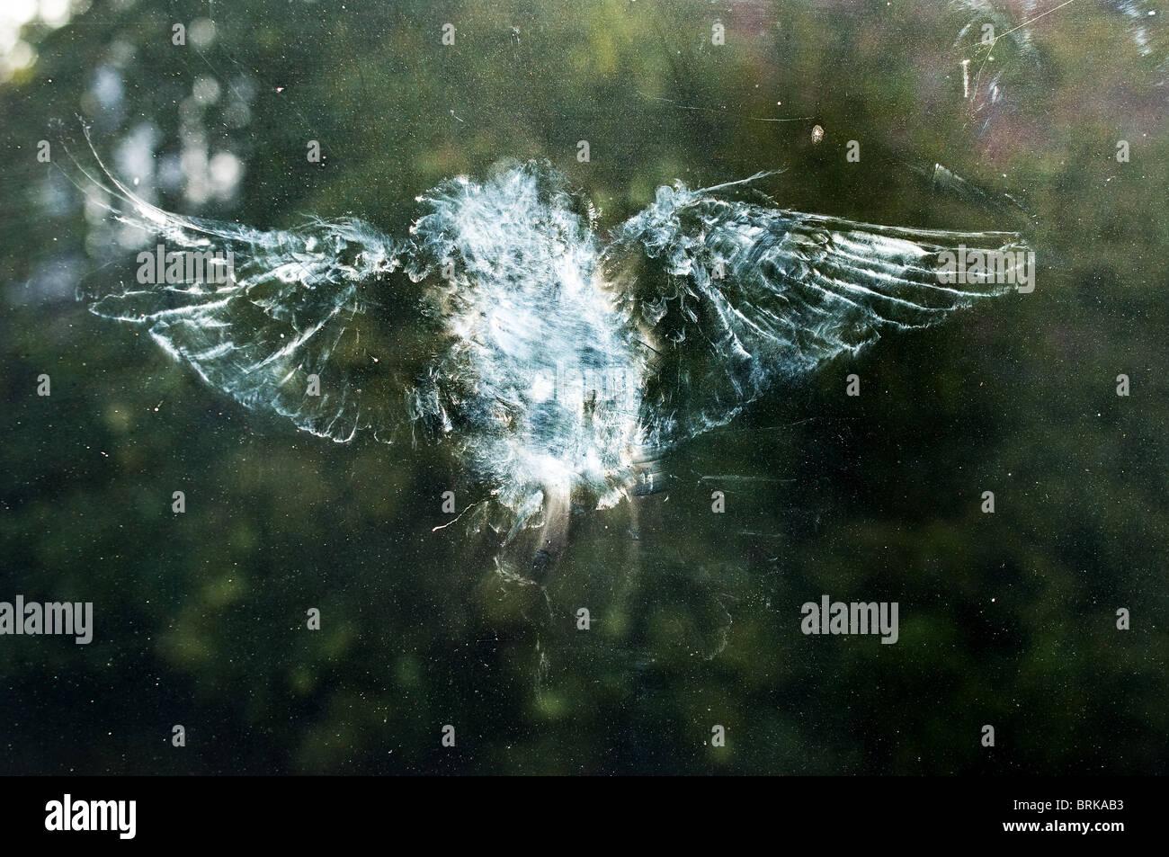 The mark of a bird having flown into a window. - Stock Image