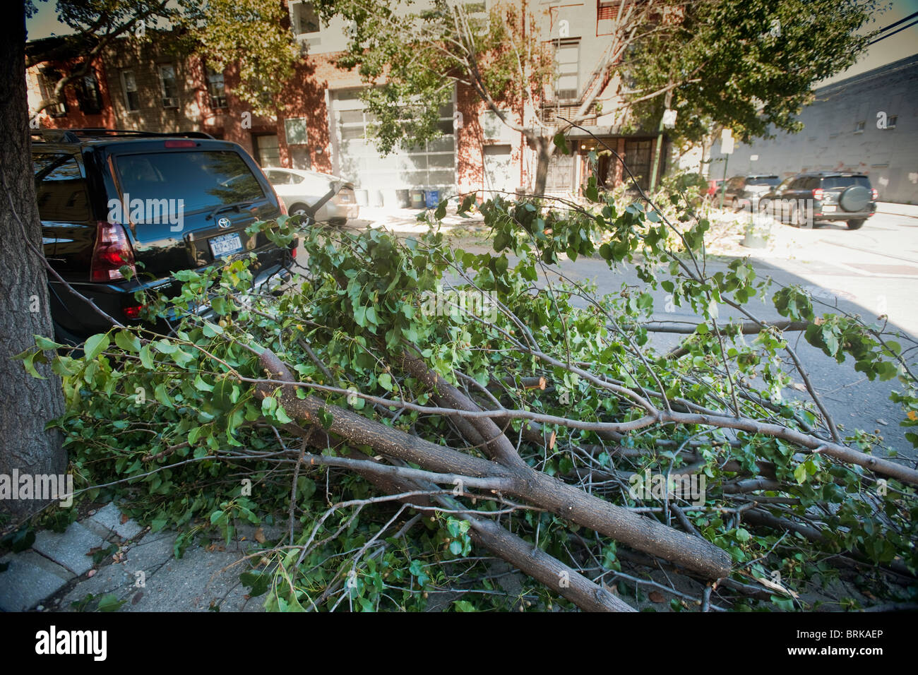 Tree Branches In The Carroll Gardens Brooklyn In Ny Await Pick Up After Being Removed
