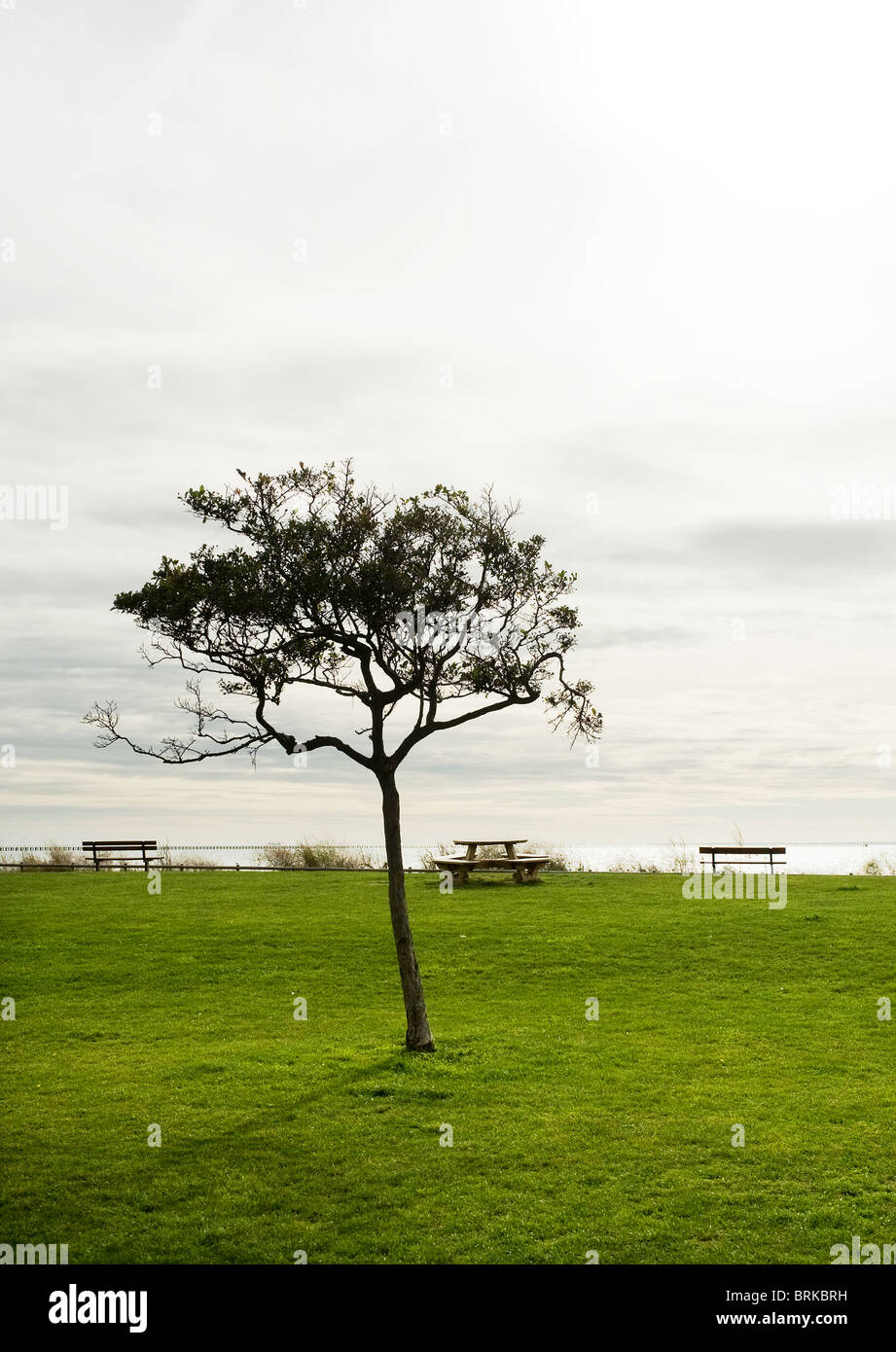 A tree near East Beach in Shoeburyness in Essex.  Photo by Gordon Scammell - Stock Image