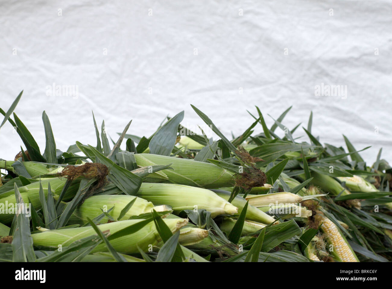 Ears of sweet corn piled high at farmers market in Cleveland Ohio - Stock Image