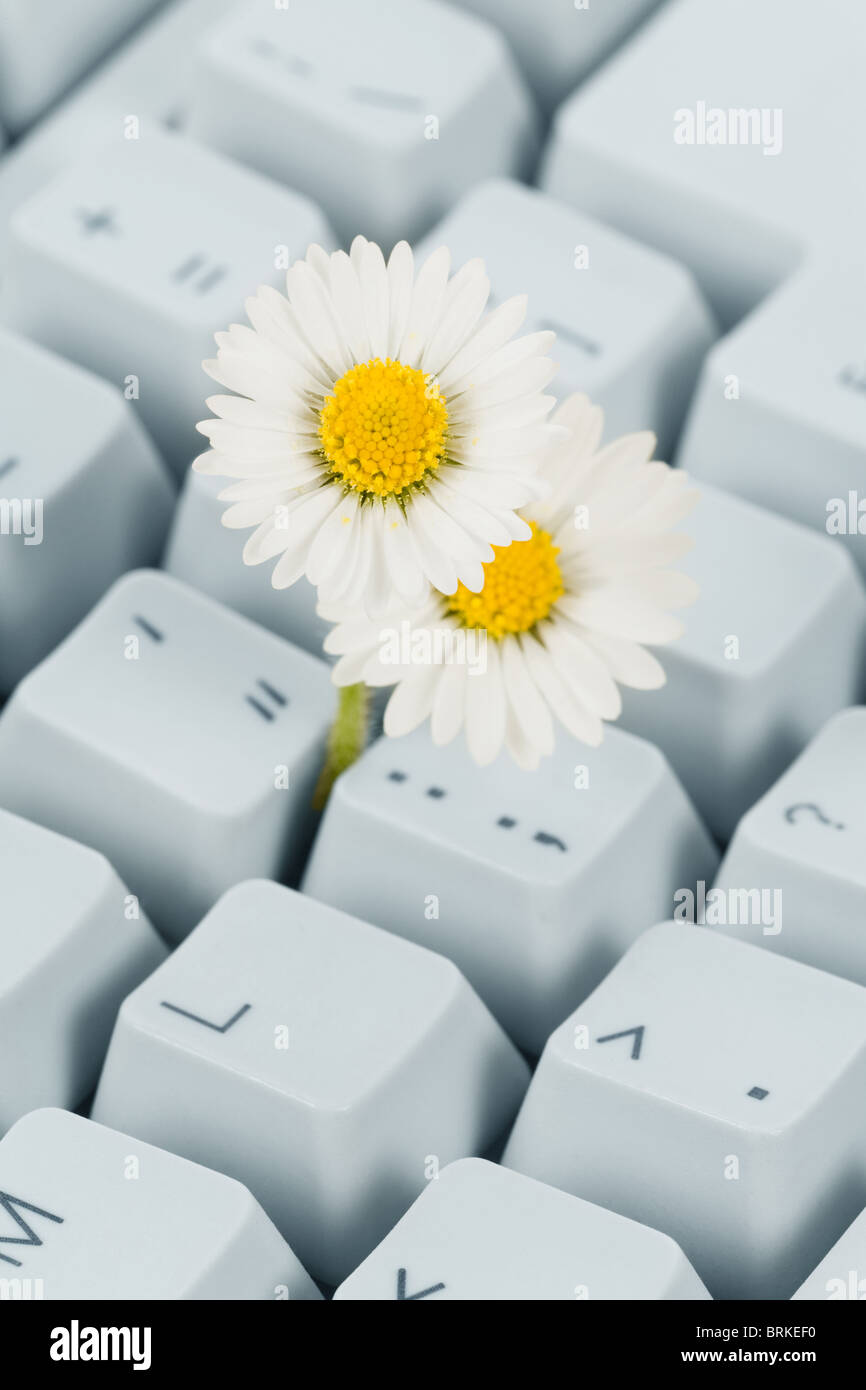 Computer Keyboard and flower, concept of Cyberspace Freedom - Stock Image