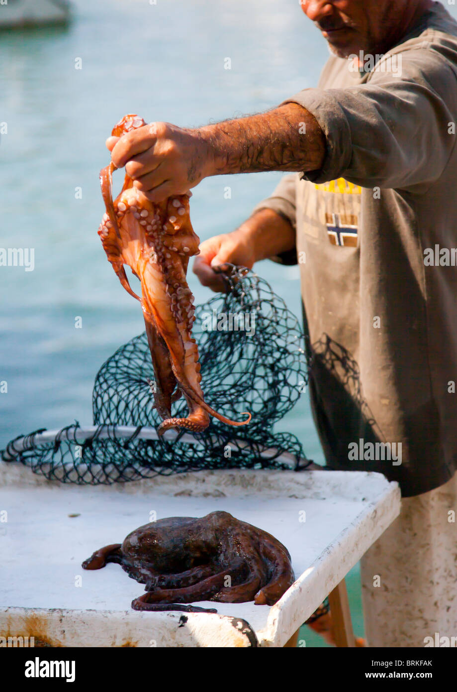 Fisherman taking an Octopus from a net in Cassis France - Stock Image