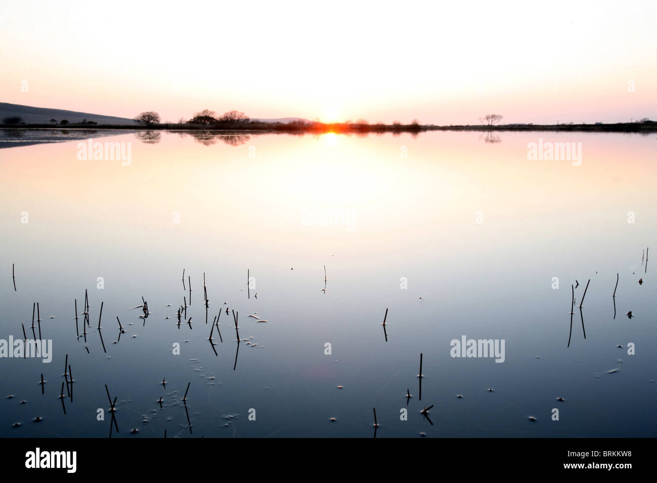 Reeds and Winter sunset at Broad Pool Gower Peninsula City and County of Swansea Wales UK - Stock Image