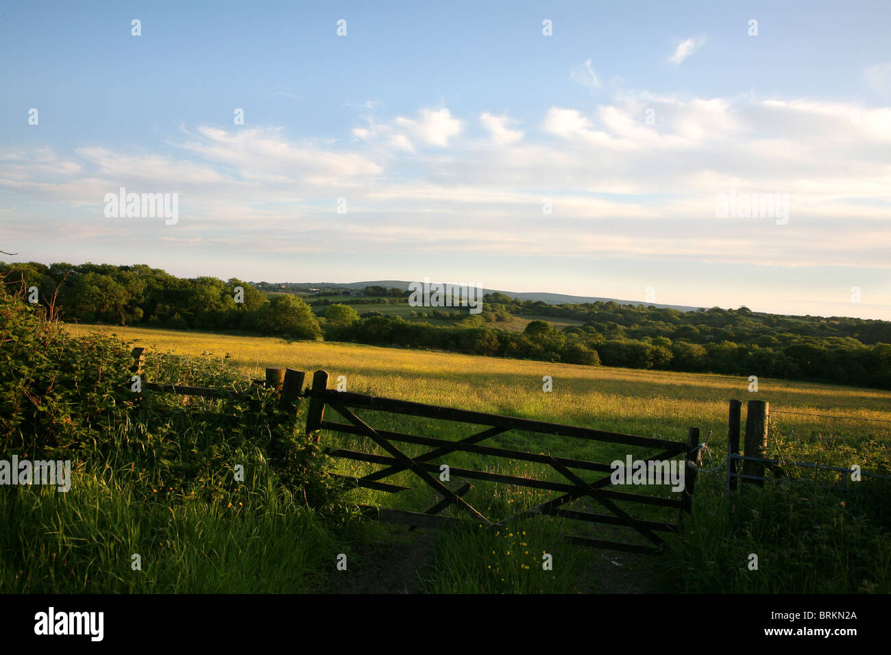View over buttercup meadow to Cefn Bryn Gower South Wales UK - Stock Image