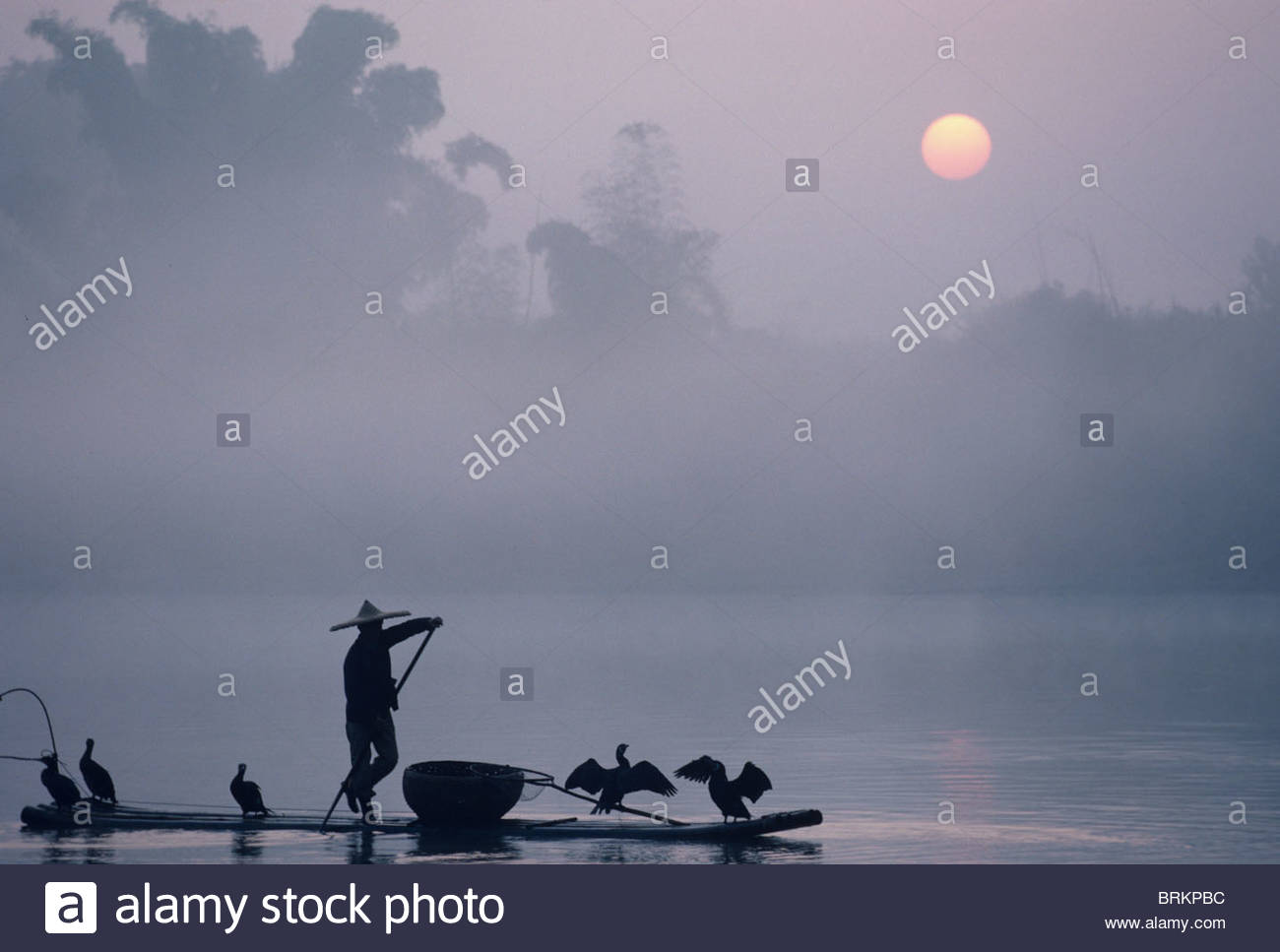 A fisher uses Cormorants to capture fish from the Li River at sunrise. - Stock Image