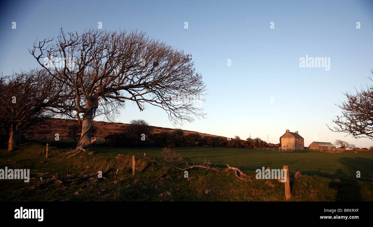 Hardings Down Gower South Wales UK with windswept beech tree and the ruin of West Cathan Farm - Stock Image
