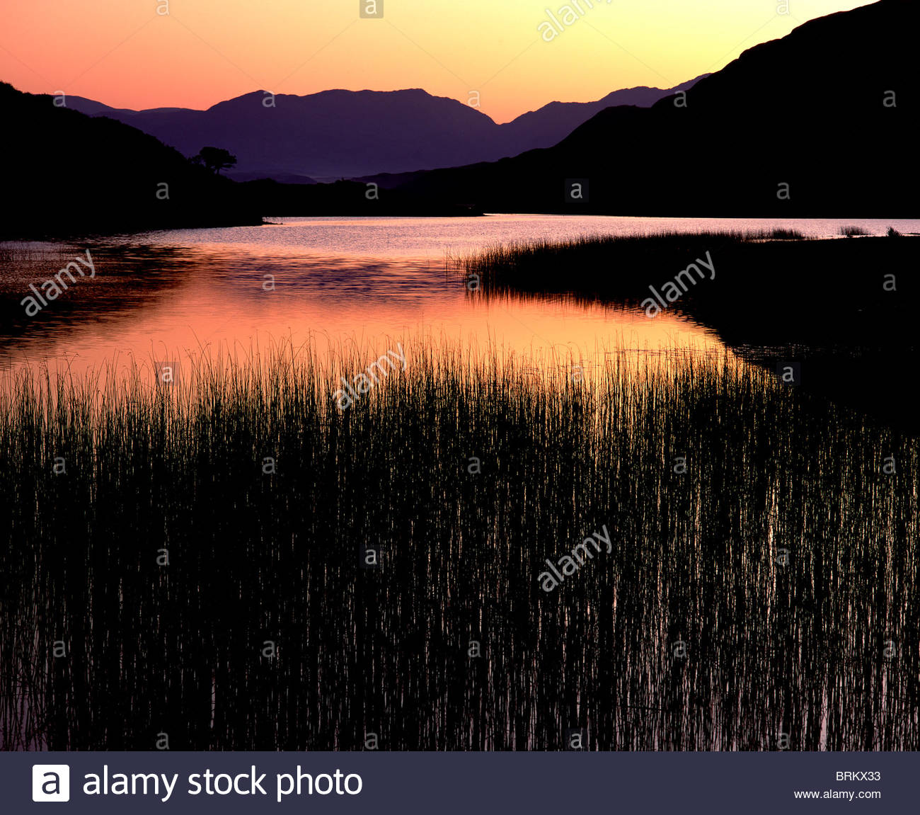 Sunsetting on a lake with reeds in the foreground. - Stock Image