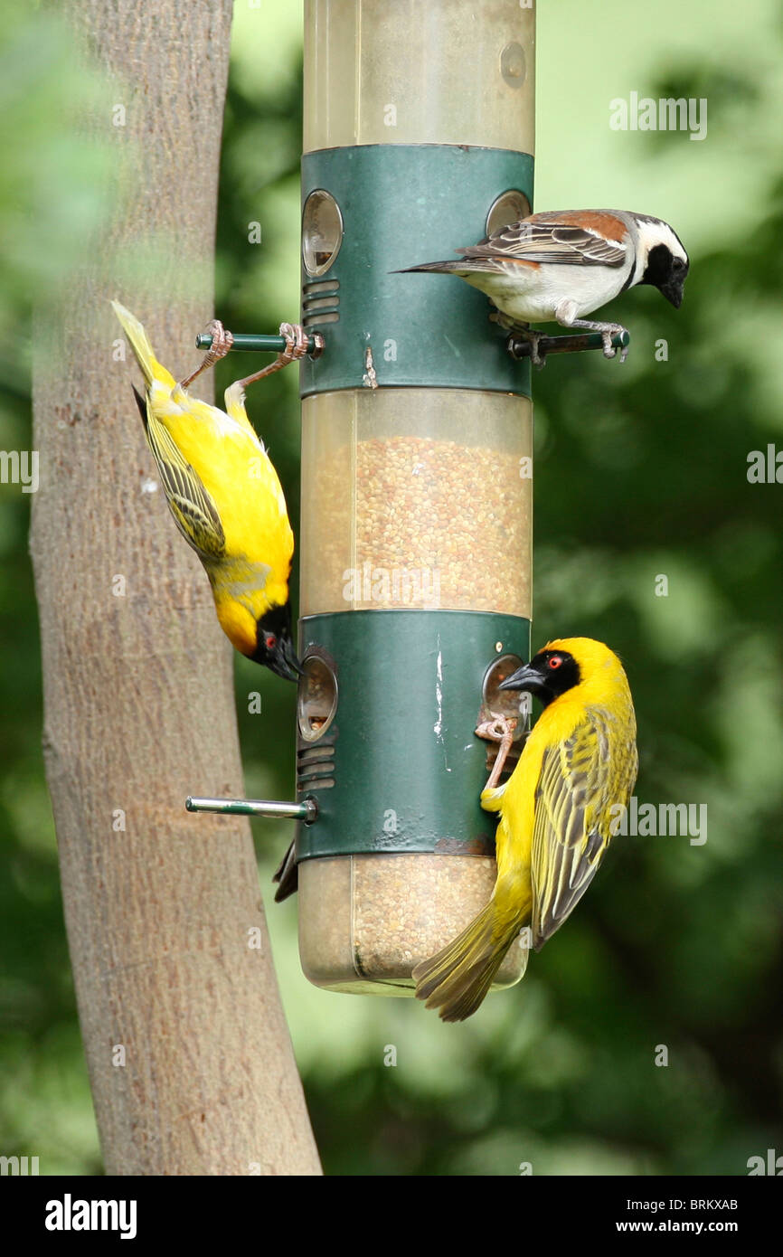blue outdoors nesting the cottage and door bird yellow box feeder