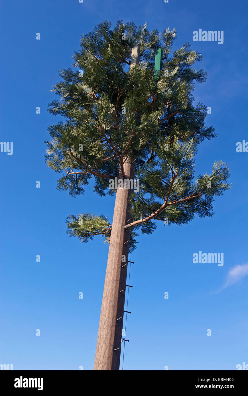 Mobile telephone  mast disguised to look like a tree. - Stock Image
