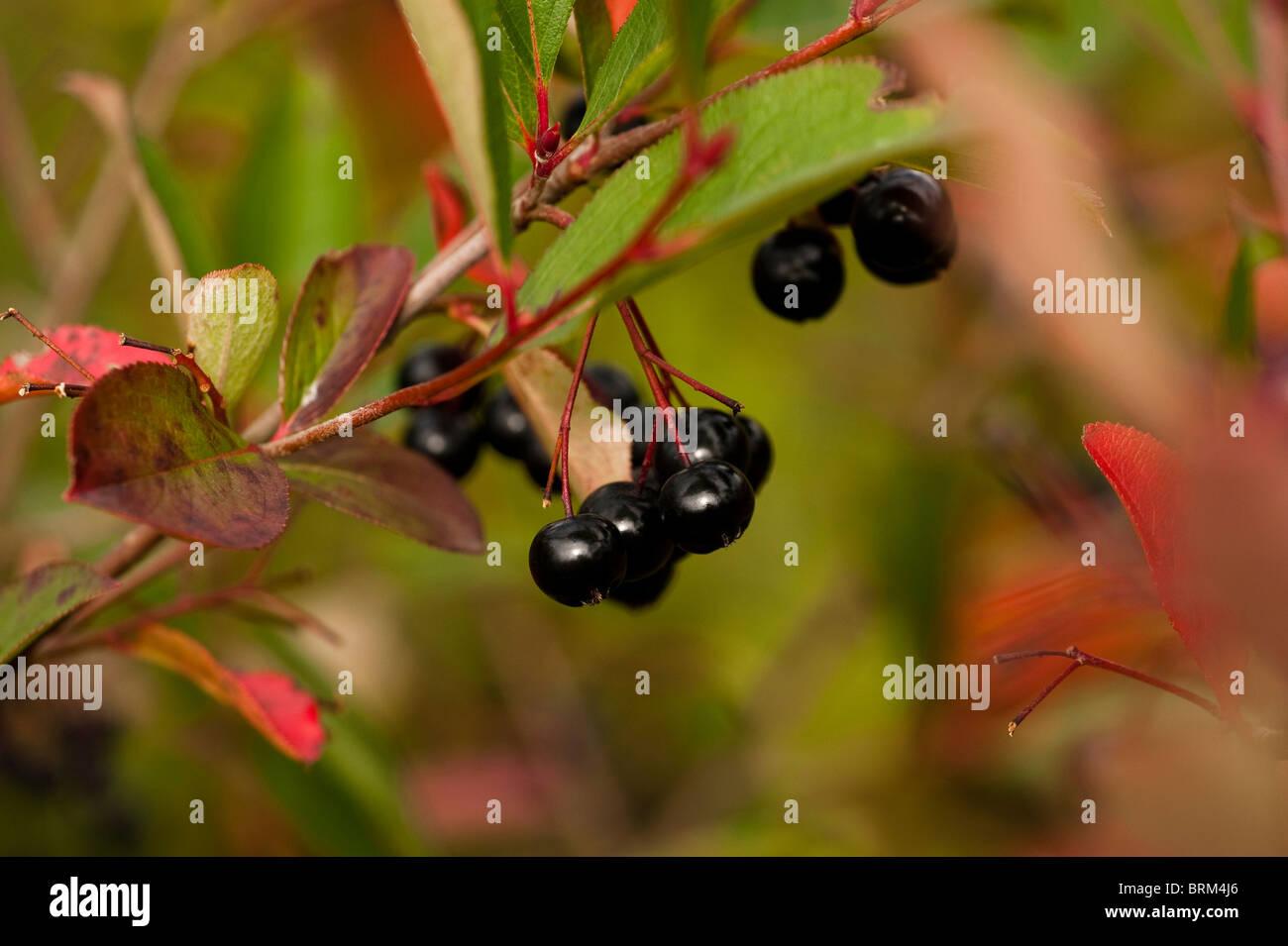 Garden Of Eden Fruits Stock Photos & Garden Of Eden Fruits Stock ...