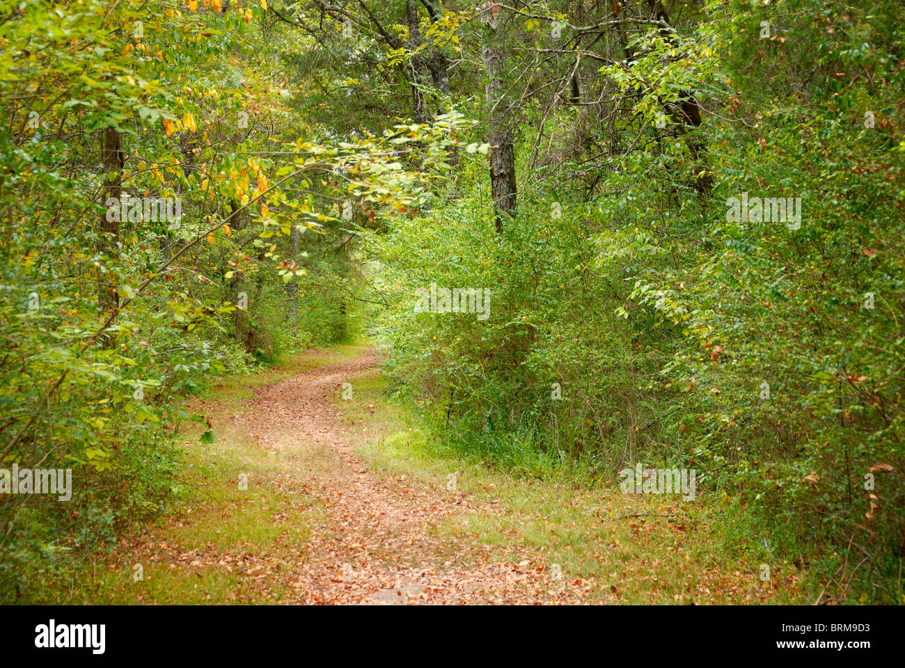 Hiking trail, Chickamauga Battlefield, Georgia, USA - Stock Image