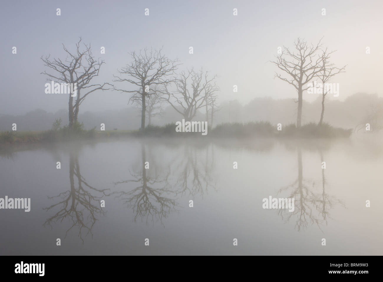 Misty morning on a fishing lake with dead trees, Morchard Road, Devon, England. - Stock Image