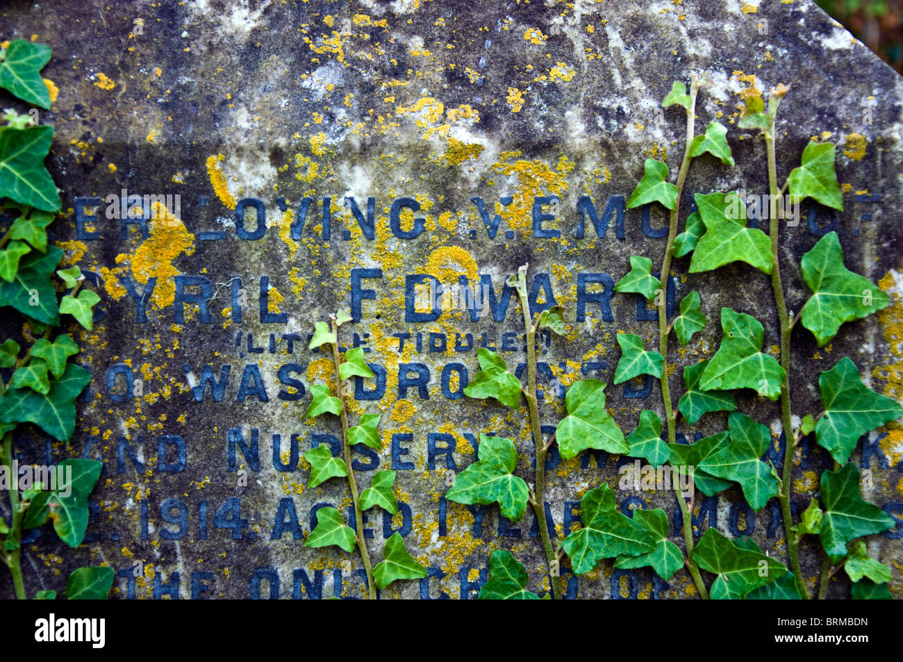 Ivy growing on an old gravestone - Stock Image