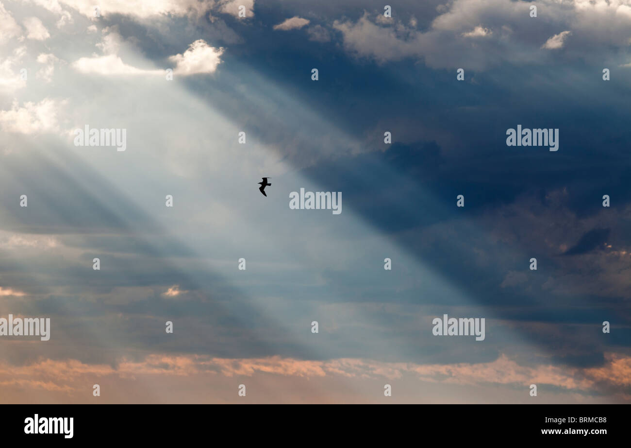 Sun shining through dark clouds and a silhouette of a bird flying on sunbeam - Stock Image