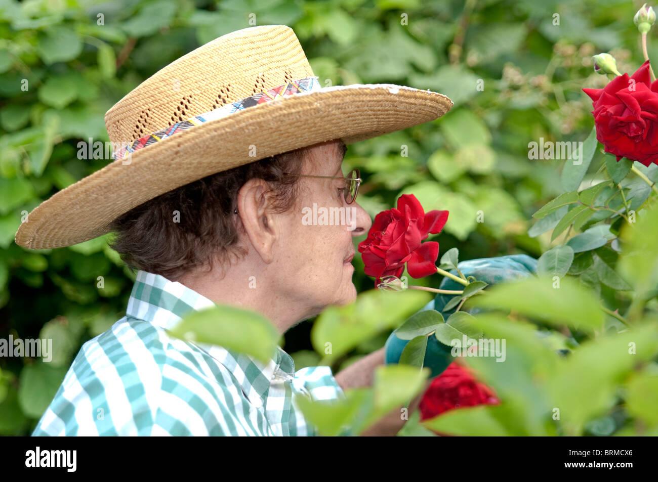 Elderly Woman working in the garden; ältere frau arbeitet im garten Stock Photo