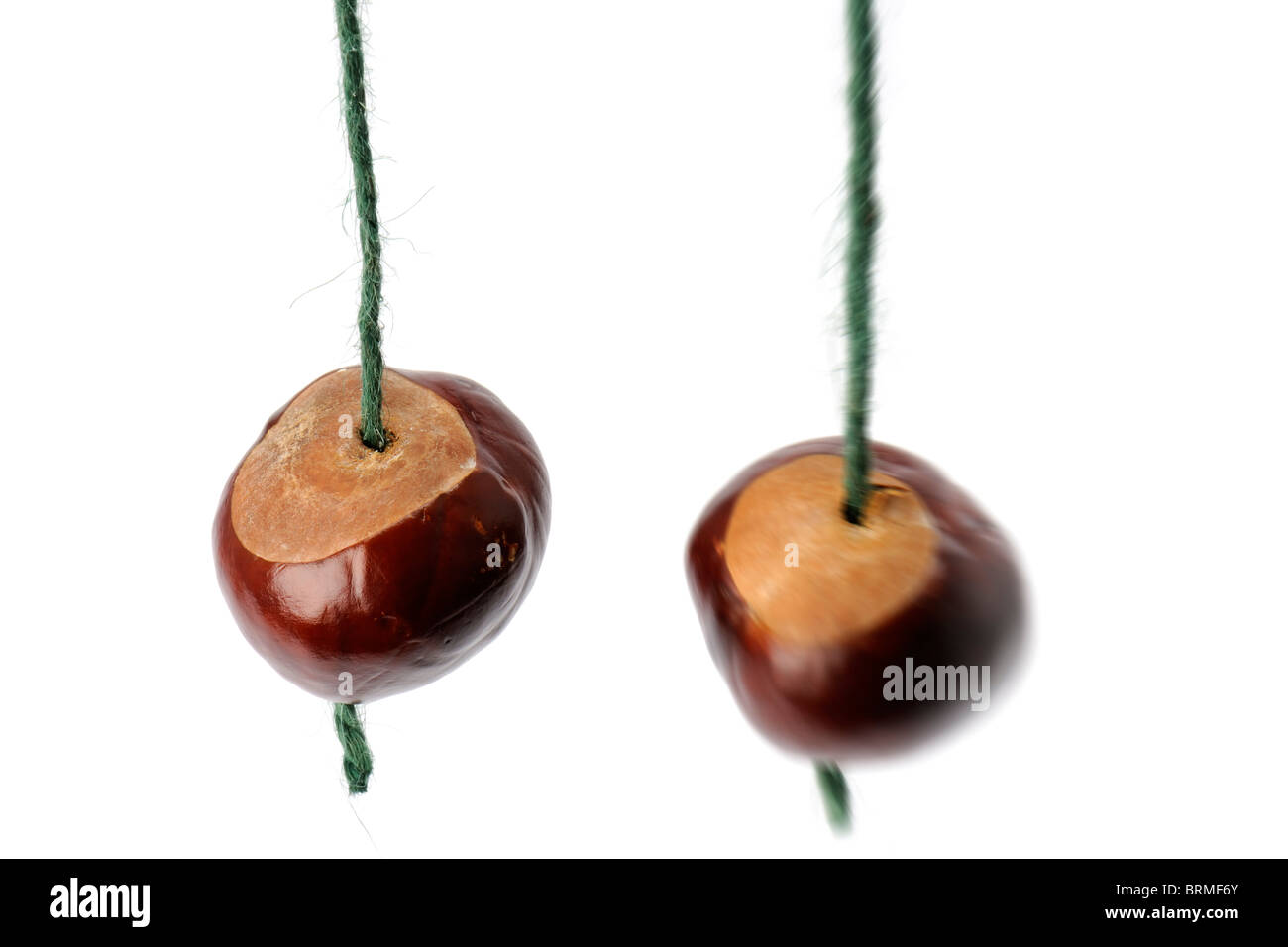 Two Conkers - Stock Image