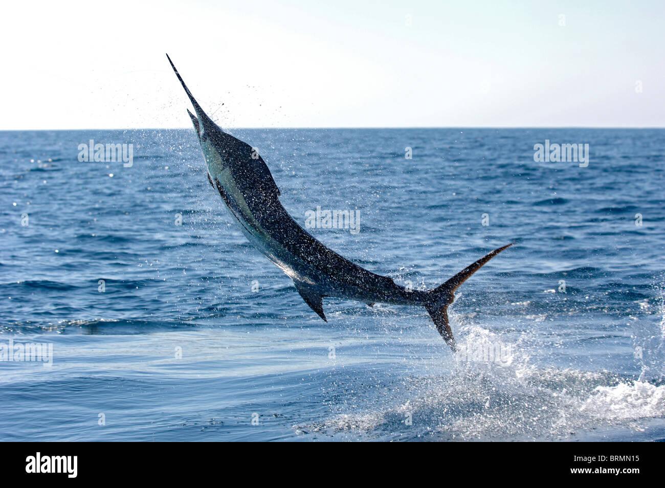 Blu Marlin hook up ha dating online relazioni rovinate