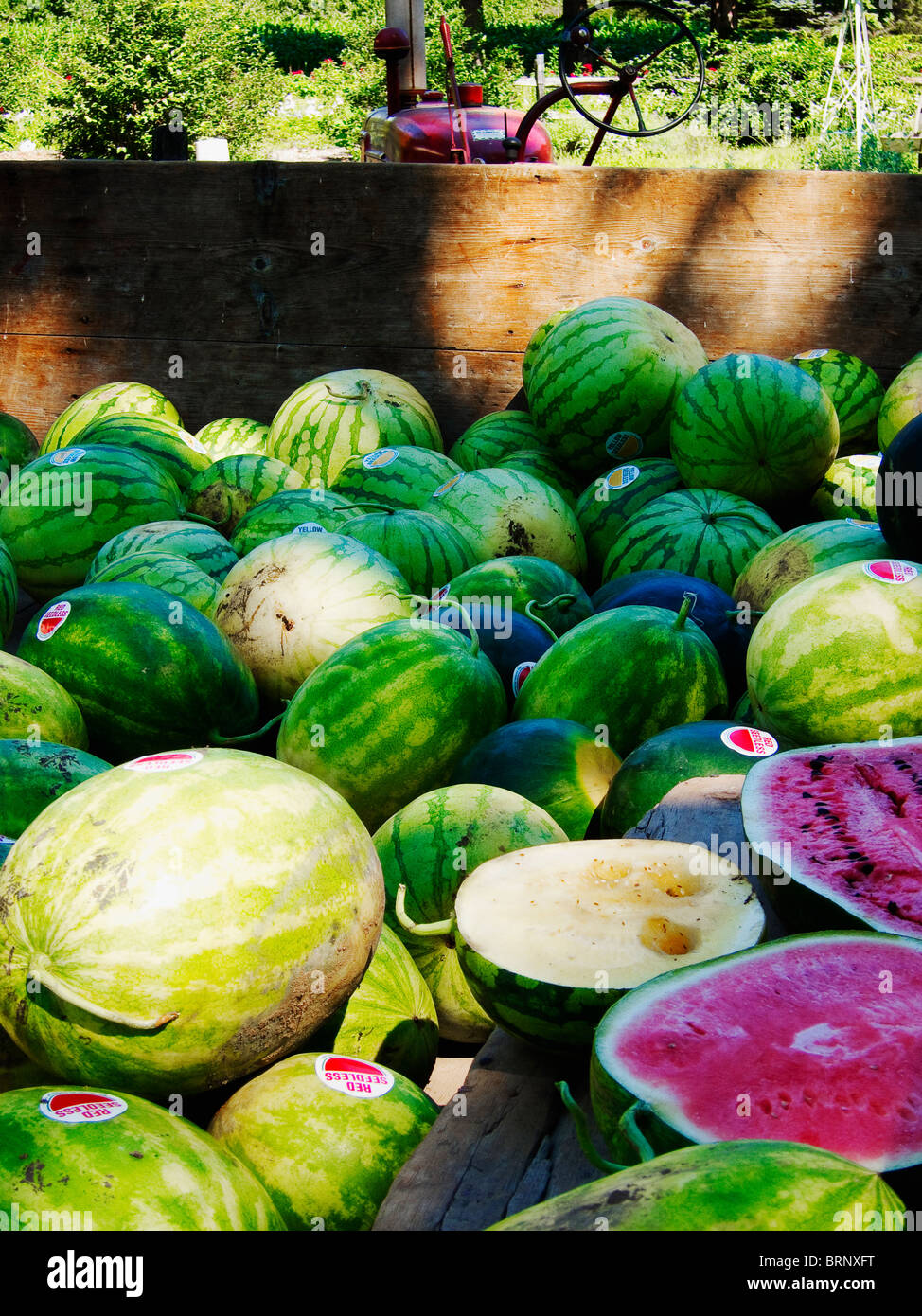 Delicious farm fresh country watermelons Stock Photo
