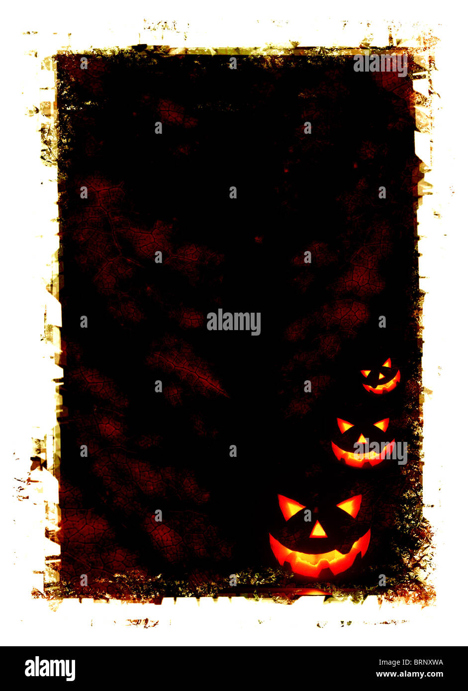 Halloween holiday card background with glowing jack-o-lantern in the darkness - Stock Image