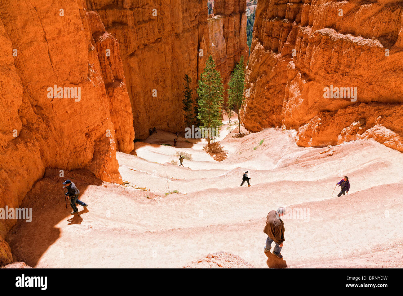 Switchback hiking trail in Bryce Canyon - Stock Image