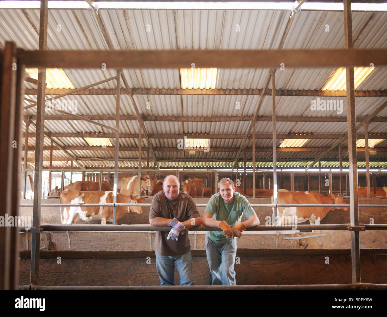 Farmer and son in milking parlor - Stock Image