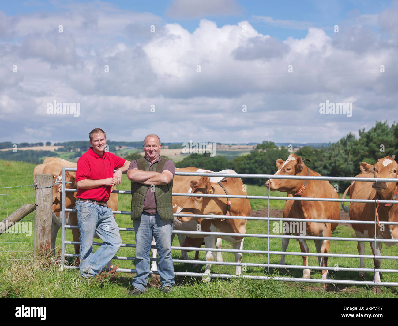 Farmer and son with Guernsey cows Stock Photo