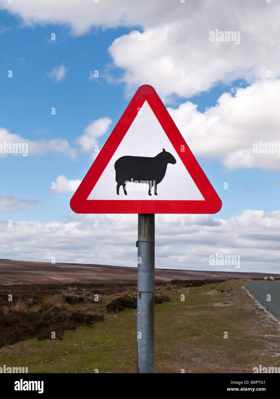 Road traffic sign warning sign of sheep ahead England UK - Stock Image