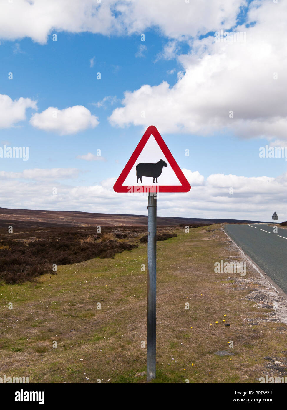 Road sign warning of sheep on the road ahead England UK - Stock Image