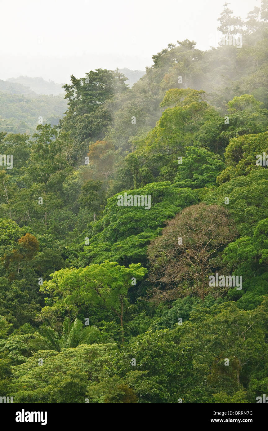 Rainforest at Cerro la Vieja in the highlands of Cocle province, Republic of Panama - Stock Image