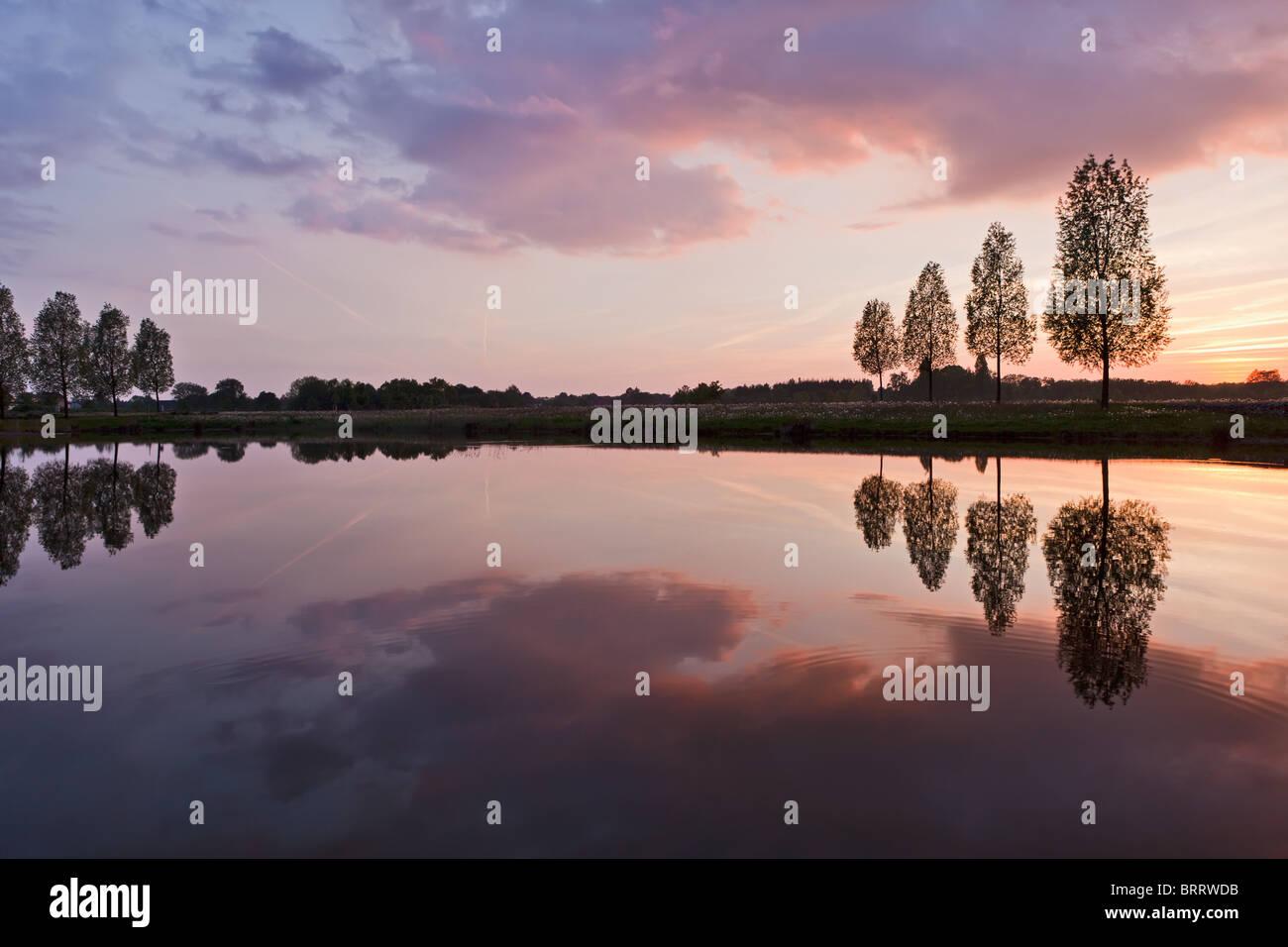 Leafless tree near lake on sunset background sky - Stock Image