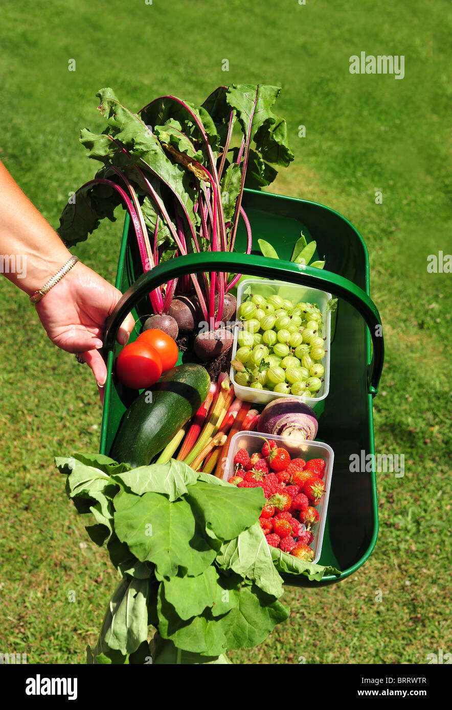 Gardeners hand with trug full of fresh fruit and vegetables. - Stock Image