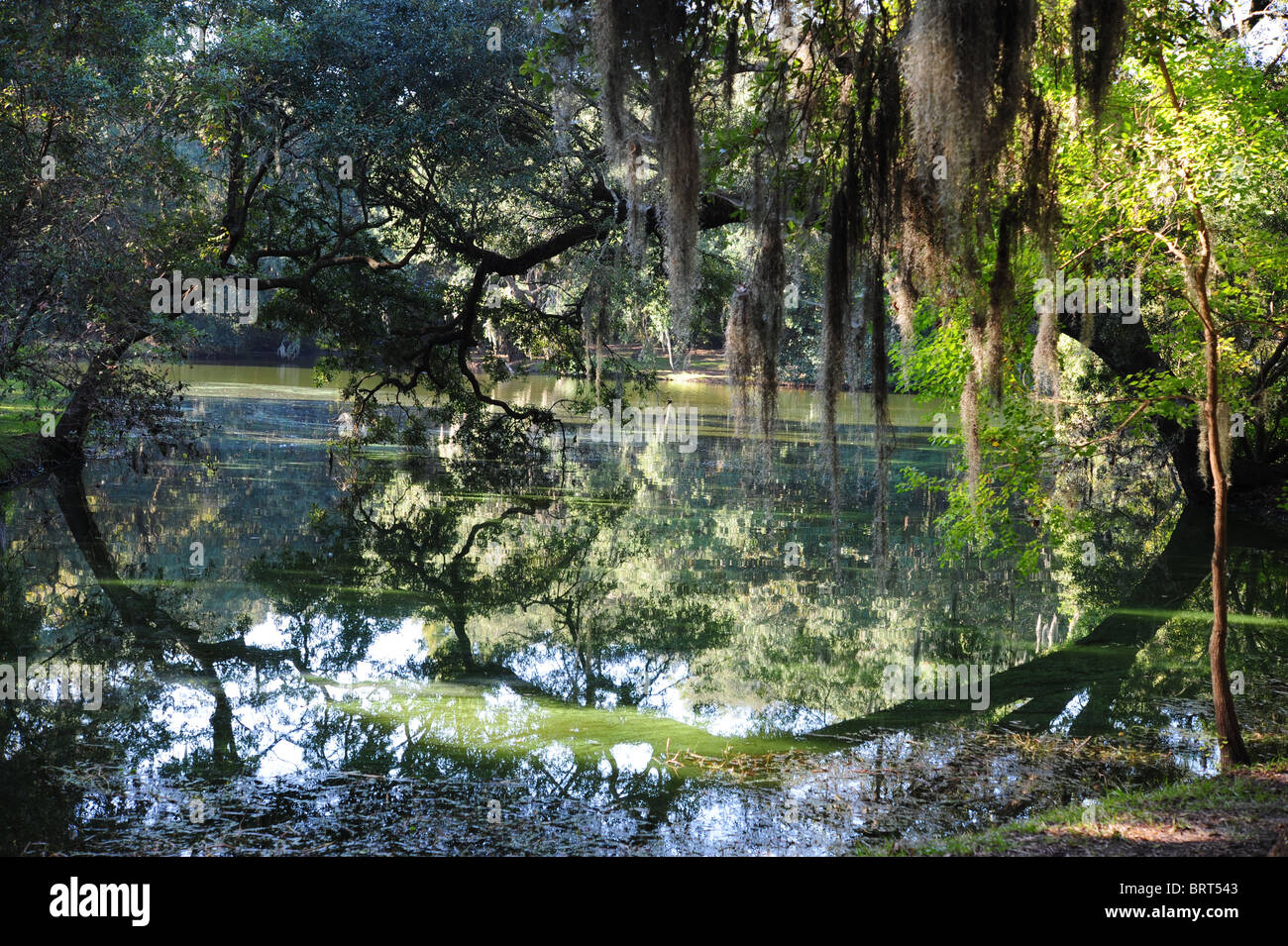 Mirrored Reflection of moss and tree branches in swamp waters at Charleston Landing, SC State Park, USA - Stock Image