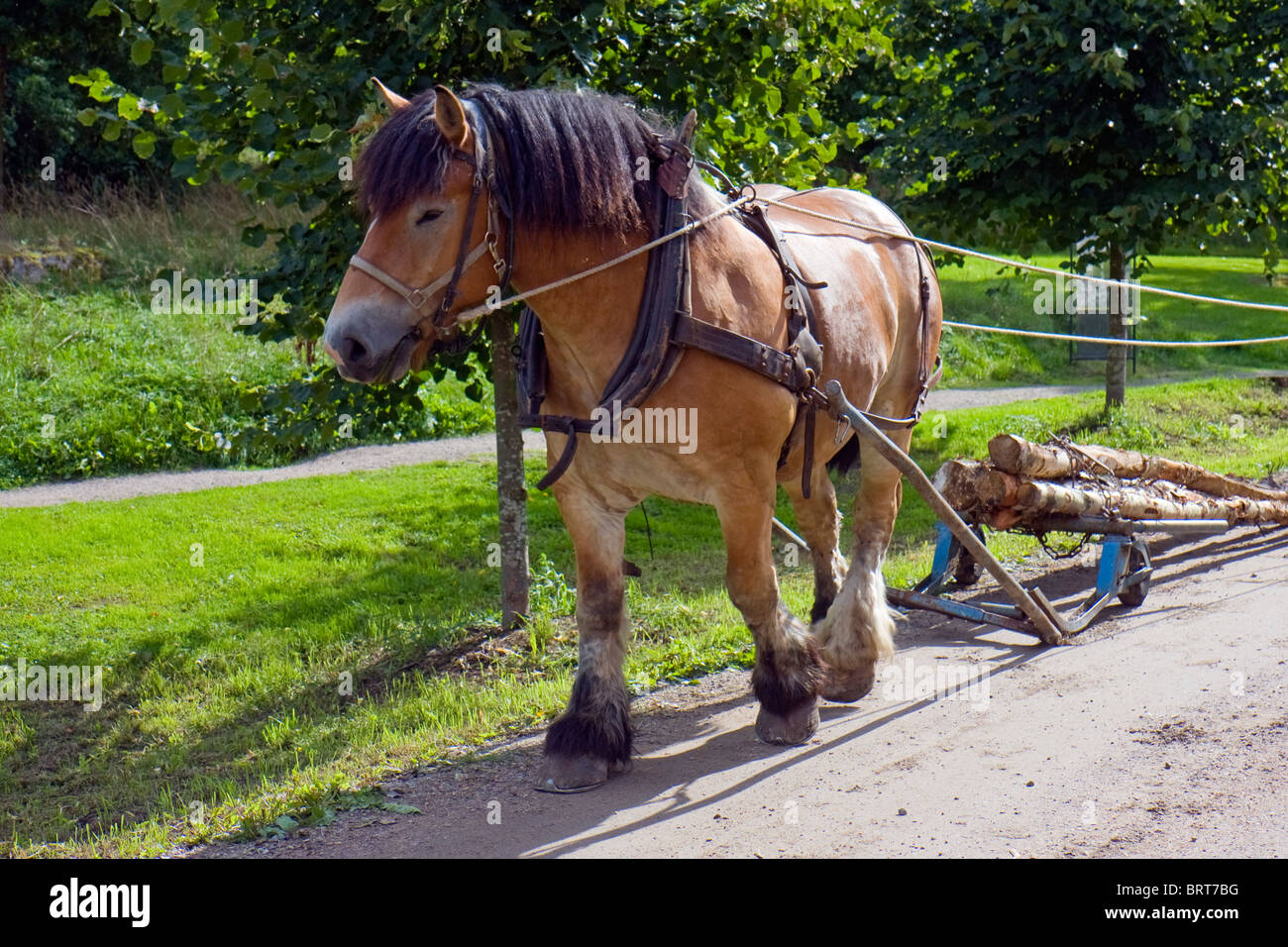 Horse Working Pulling Logs High Resolution Stock Photography And Images Alamy