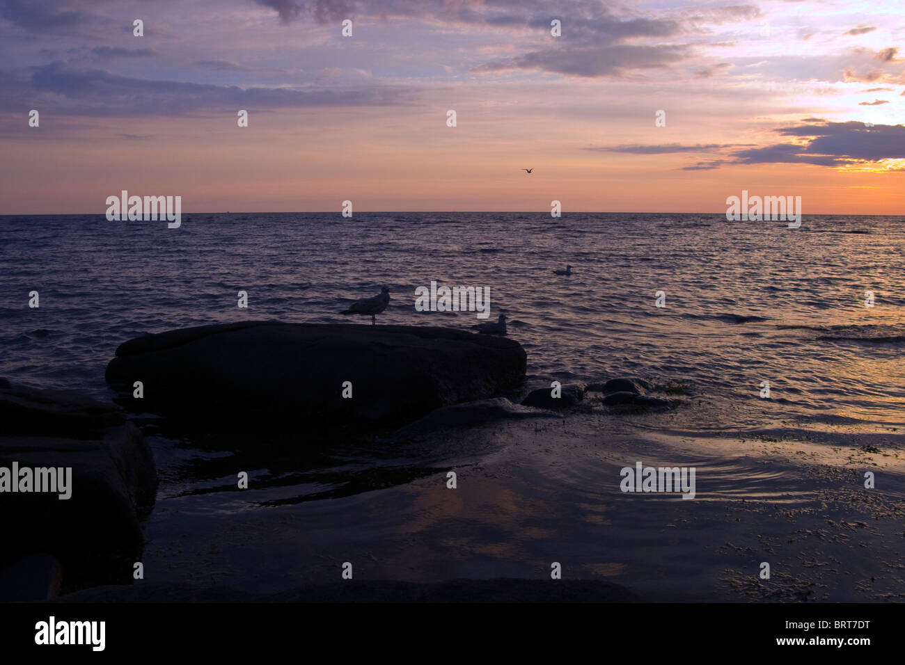 Sunset outside Varberg on the Swedish west coast by summer - Stock Image