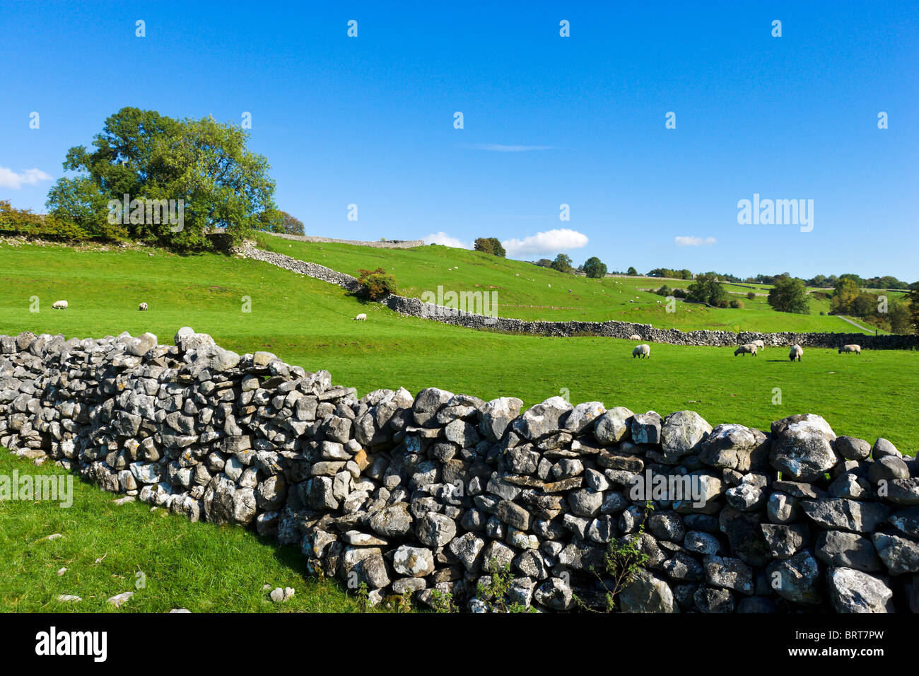 Dry stone wall in the countryside near Linton Falls, Grassington, Wharfedale, Yorkshire Dales National Park, England, - Stock Image