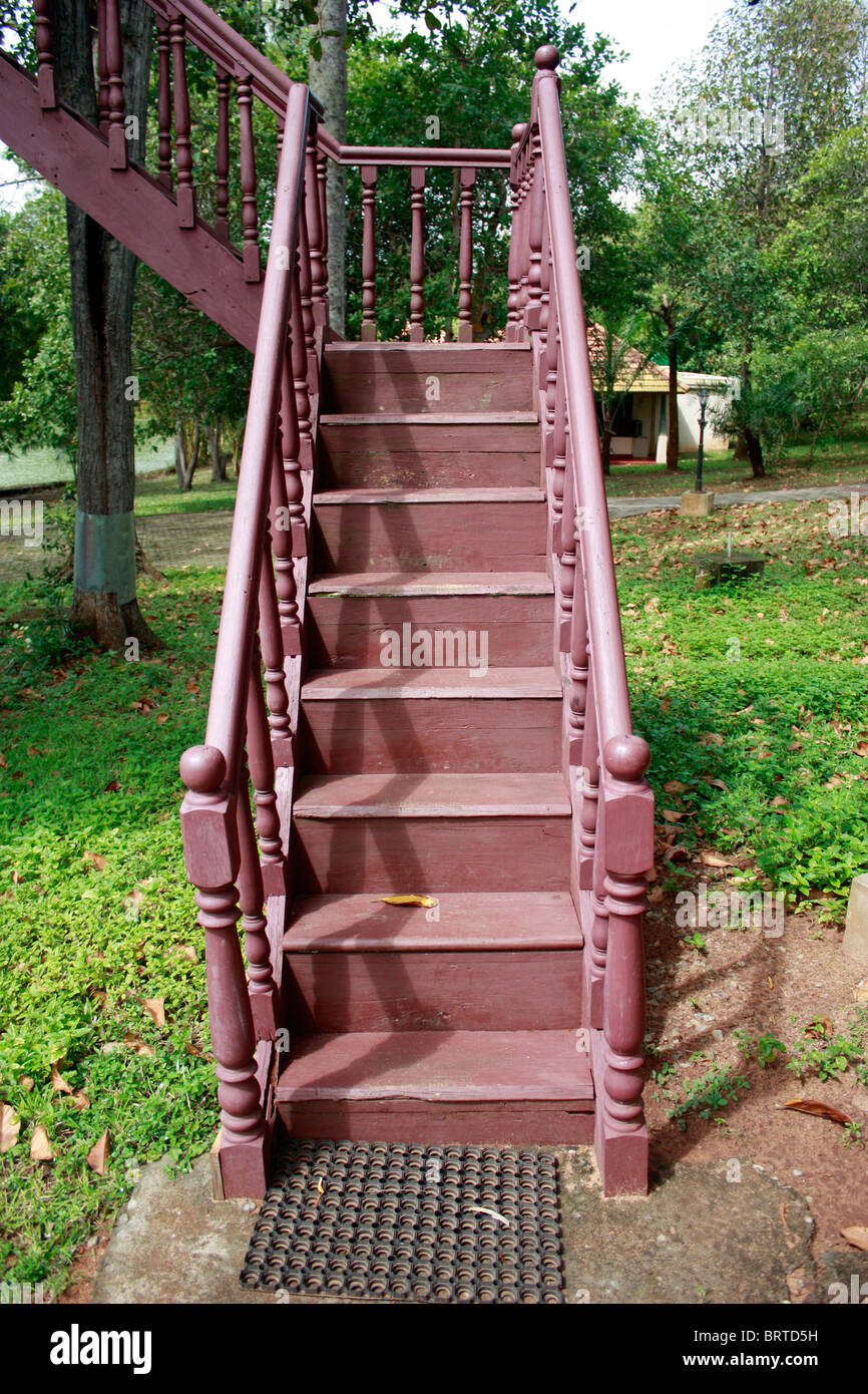 Artistic Wooden steps leading into a tree top tent house - Stock Image