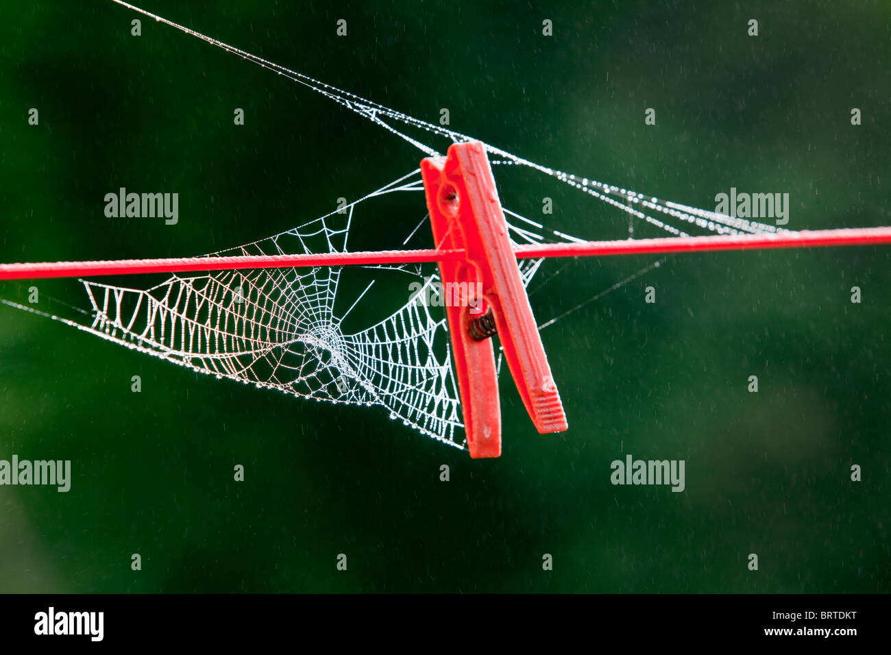 A Spiders cobweb created around a red clothes peg on a garden clothes line - Stock Image
