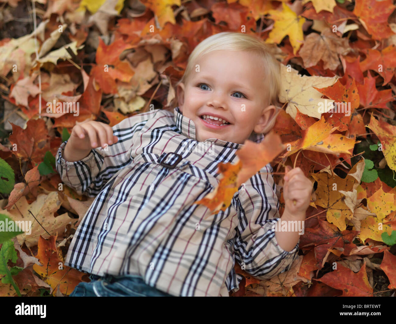 Happy two year old girl lying on fallen tree leaves in autumn nature - Stock Image